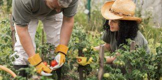 mezőgazdasági idénymunkák