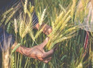 őstermelő és őstermelők családi gazdasága 2021